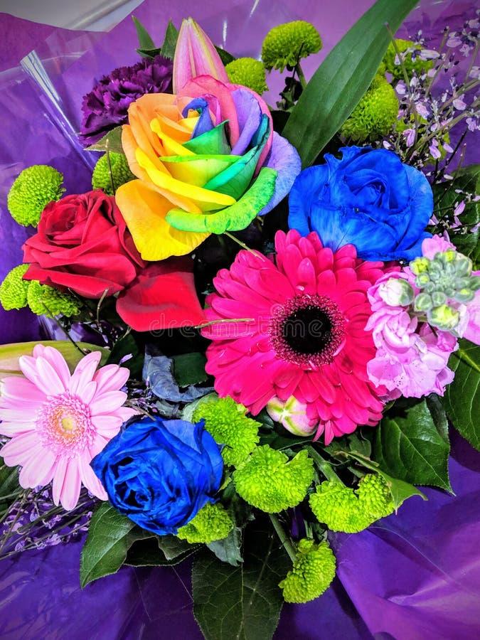 Flores frescas coloridas fotografia de stock