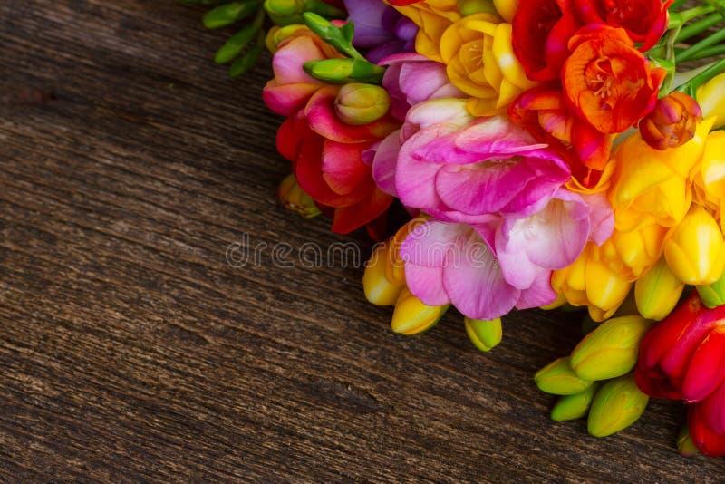Flores frescas de la fresia foto de archivo