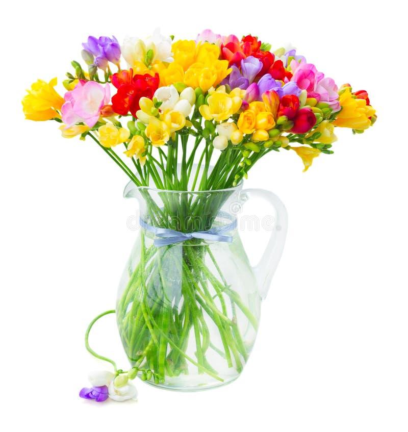 Flores frescas de la fresia foto de archivo libre de regalías
