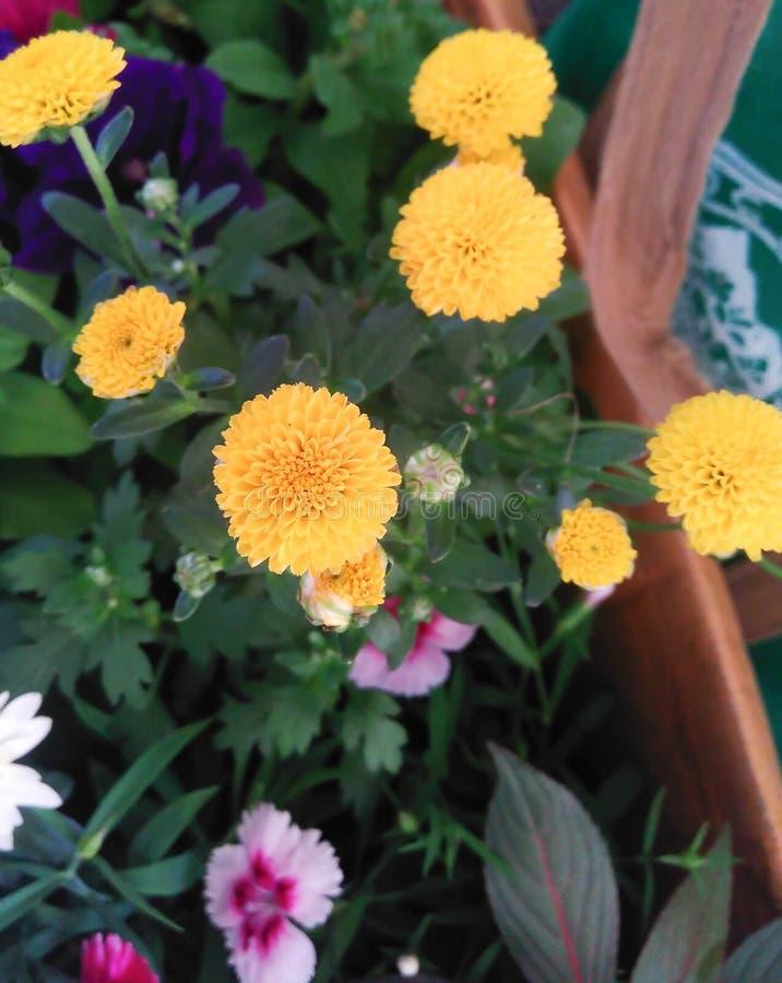 Flores frescas do jardim do jardim foto de stock