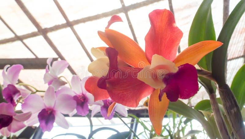 Flores frescas do jardim do jardim foto de stock royalty free