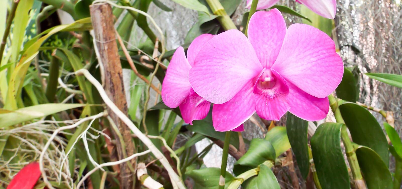 Flores frescas do jardim do jardim imagem de stock