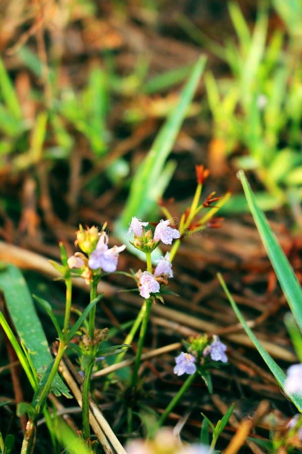 Flores frescas, flores de la hierba imagen de archivo libre de regalías