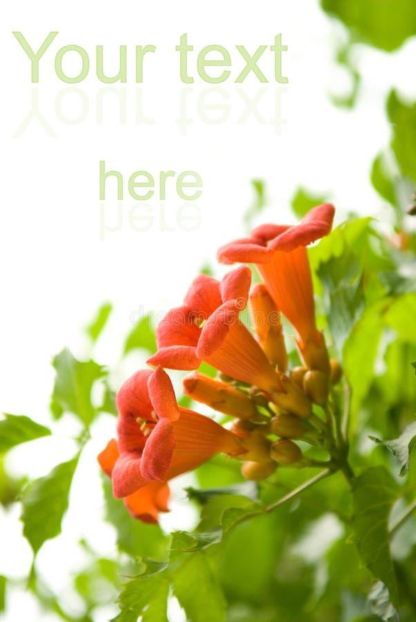Flores frescas hermosas fotografía de archivo libre de regalías
