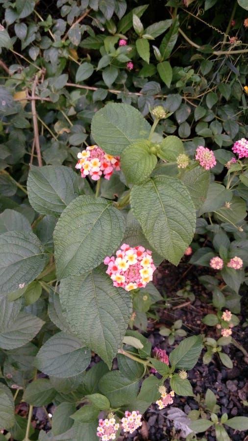 Flores frescas que florecen en jardín durante estación de primavera fotos de archivo libres de regalías