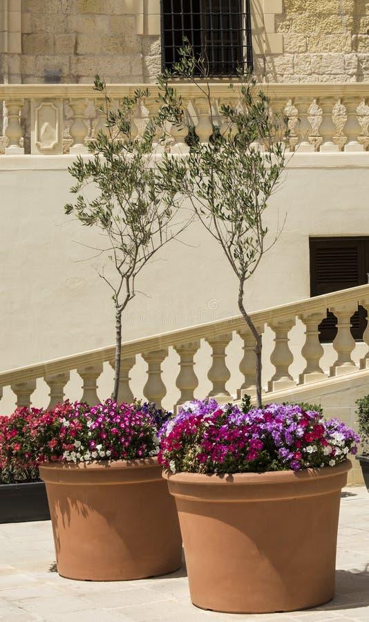 Flores frescas y olivos fotografía de archivo