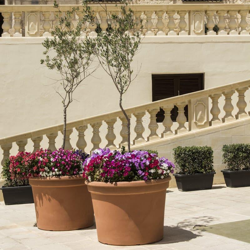 Flores frescas y olivos fotografía de archivo libre de regalías