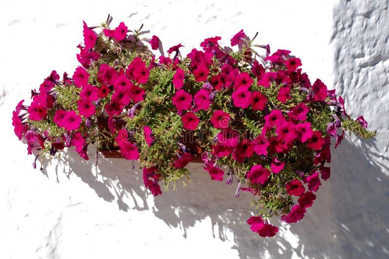 Download Flores fucsias foto de archivo. Imagen de pétalos, pétalo - 7282818