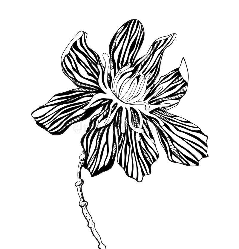 Flores gráficas decorativas ilustração royalty free
