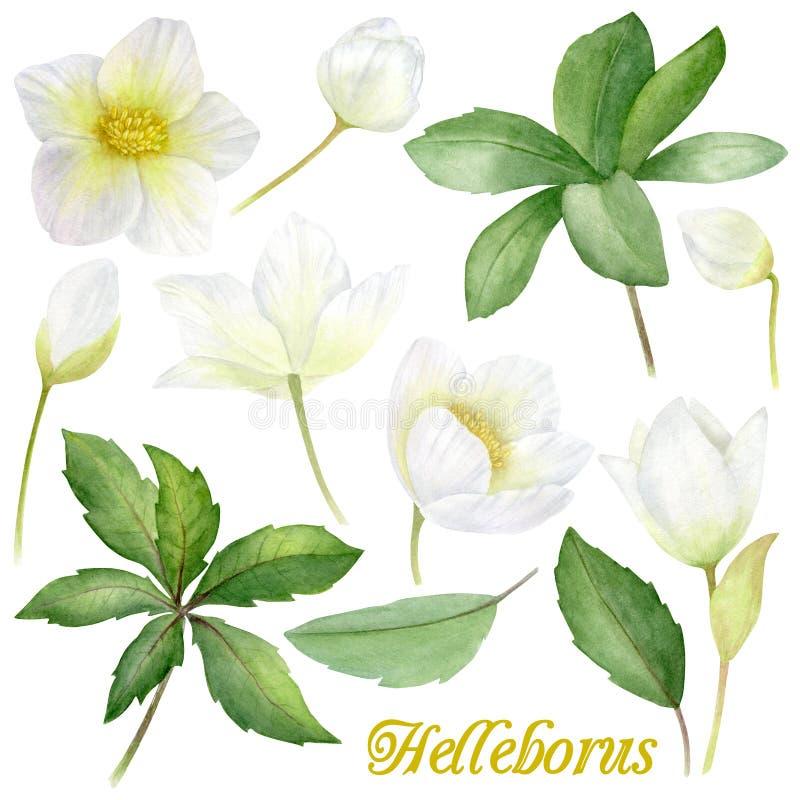 Flores Handpainted da aquarela ajustadas no estilo do vintage Ele ` s perfeito para cartões, convite do casamento, aniversário e ilustração stock