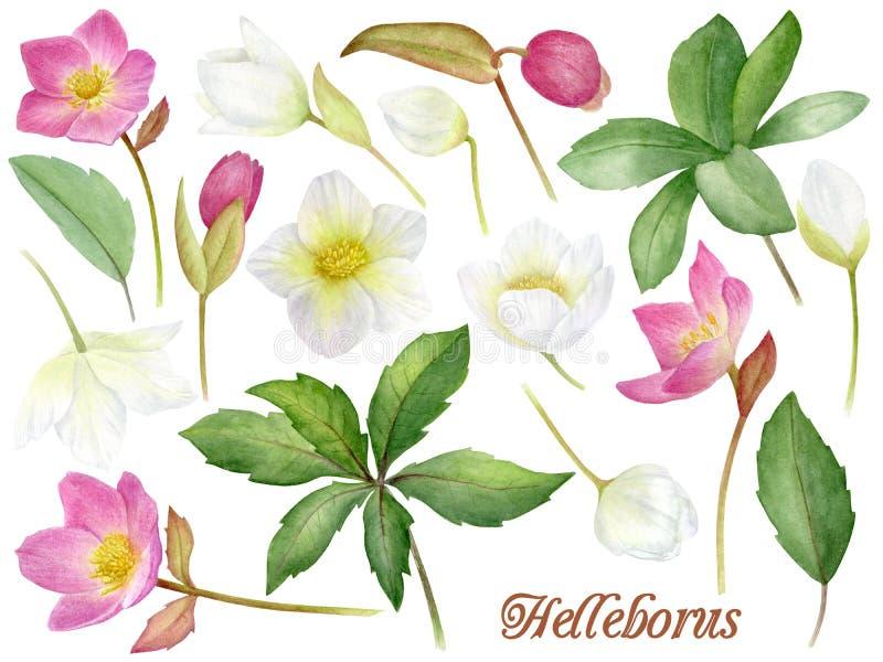 Flores Handpainted da aquarela ajustadas no estilo do vintage Ele ` s perfeito para cartões, convite do casamento, aniversário e ilustração do vetor