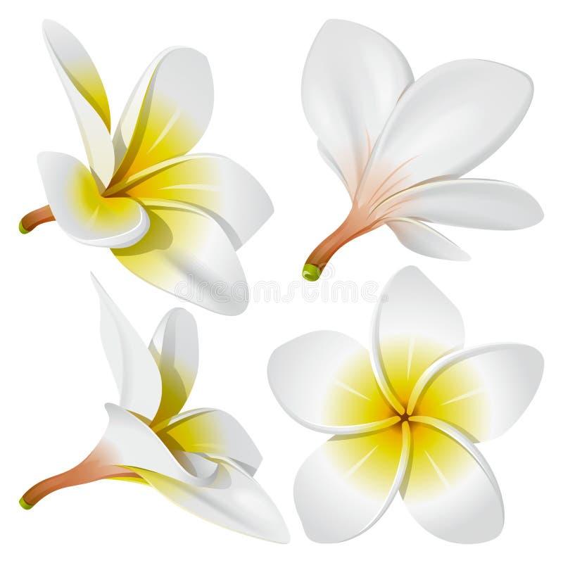 Flores havaianas da colar ilustração royalty free