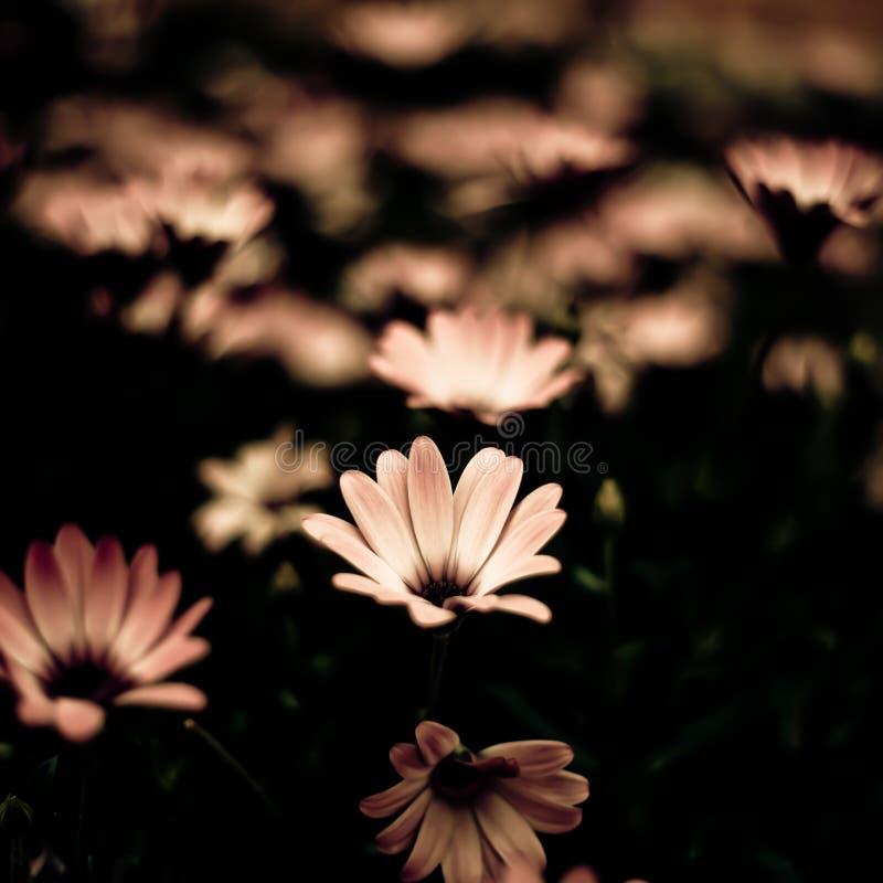 Flores hermosas fotos de archivo libres de regalías