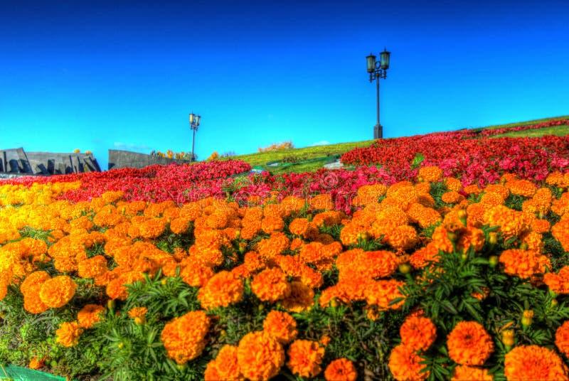 Flores hermosas imagen de archivo