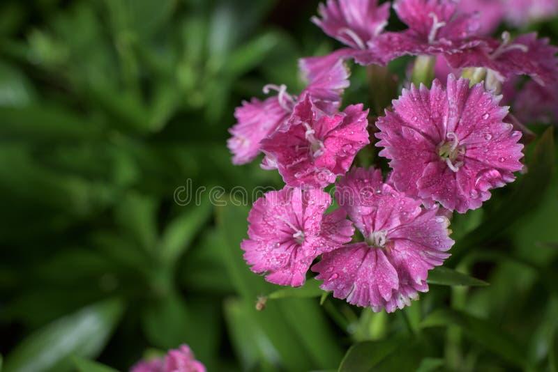 Download Flores hermosas foto de archivo. Imagen de travieso, fondo - 64202982