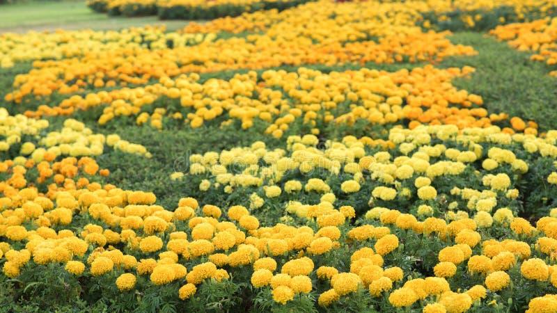 Download Flores hermosas imagen de archivo. Imagen de floral, vida - 64203577