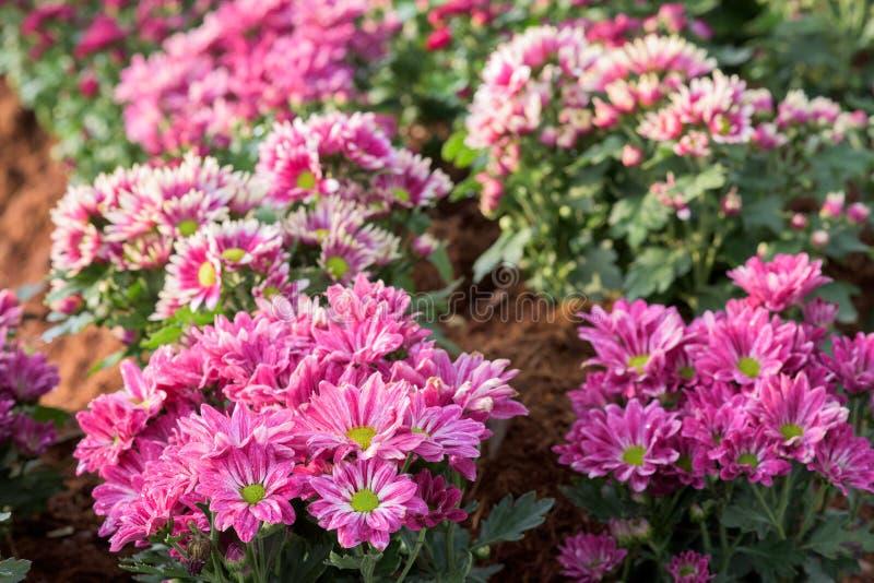 Download Flores hermosas imagen de archivo. Imagen de anaranjado - 64204051