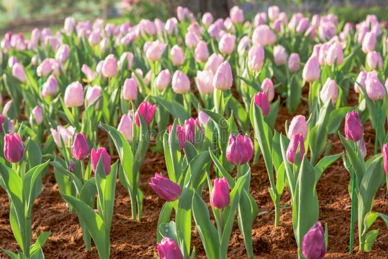 Download Flores hermosas foto de archivo. Imagen de vida, flor - 64204100