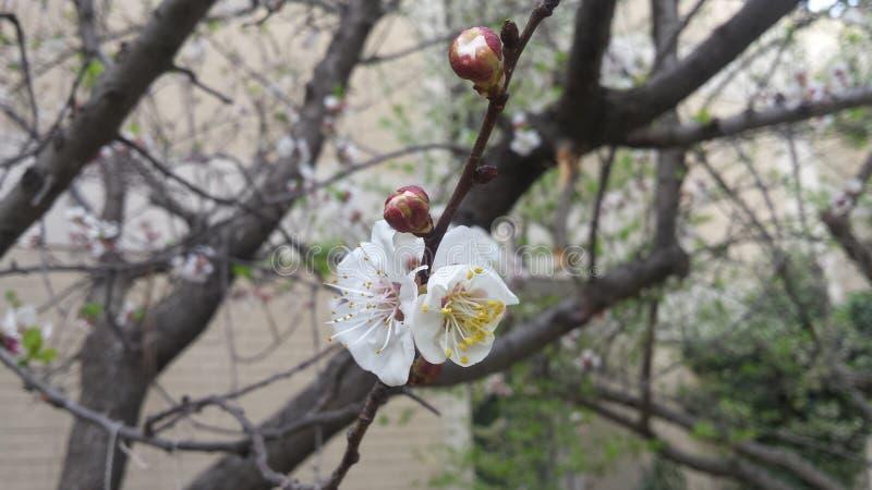 Flores hermosas foto de archivo