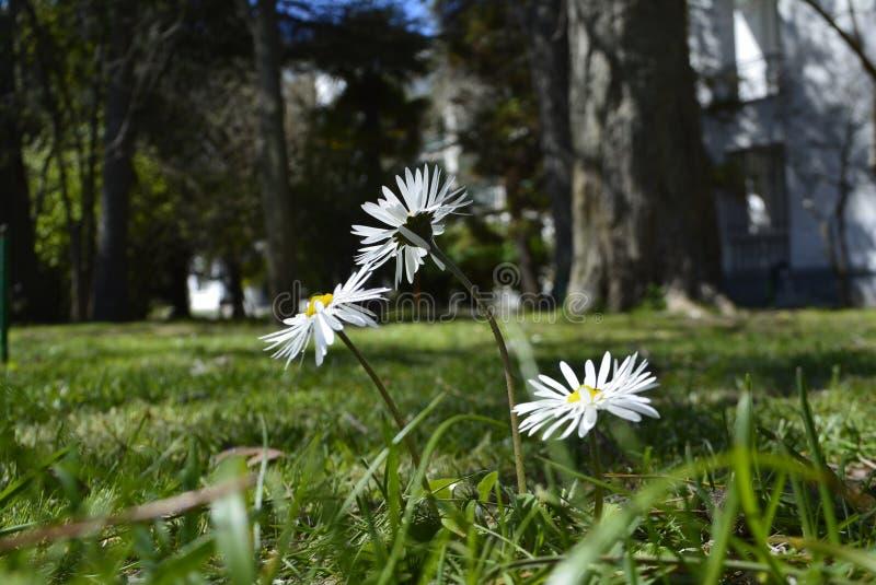 Flores hermosas imágenes de archivo libres de regalías