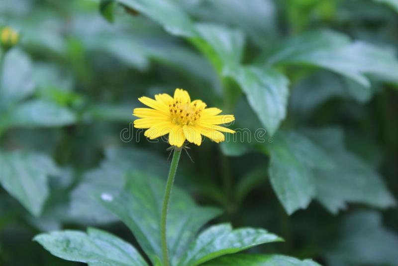 Flores hermosas amarillas imágenes de archivo libres de regalías