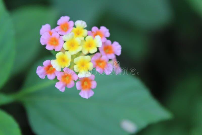 Flores hermosas amarillas fotografía de archivo