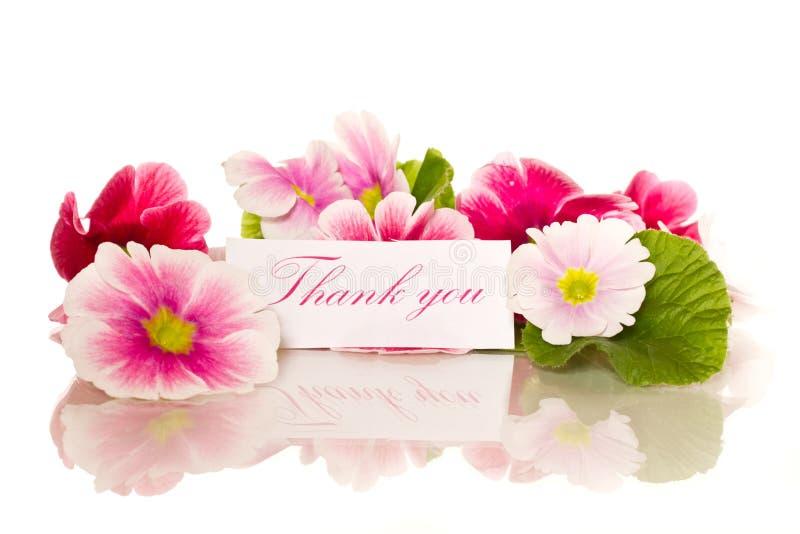 Flores de la begonia fotos de archivo libres de regalías