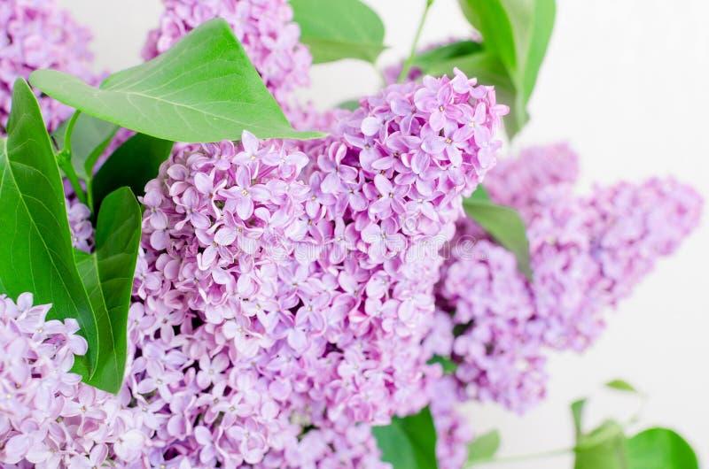 Flores hermosas de la lila imagenes de archivo