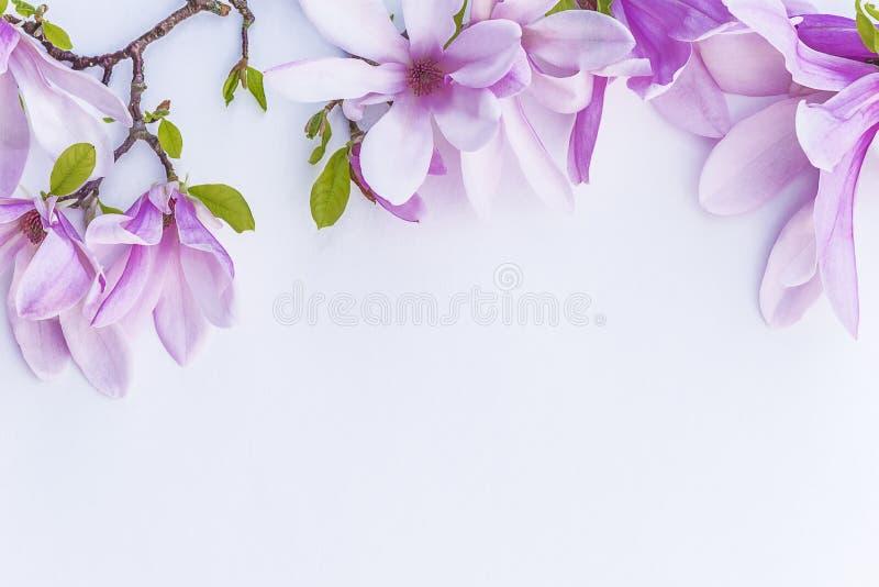 Flores hermosas de la magnolia imagen de archivo libre de regalías