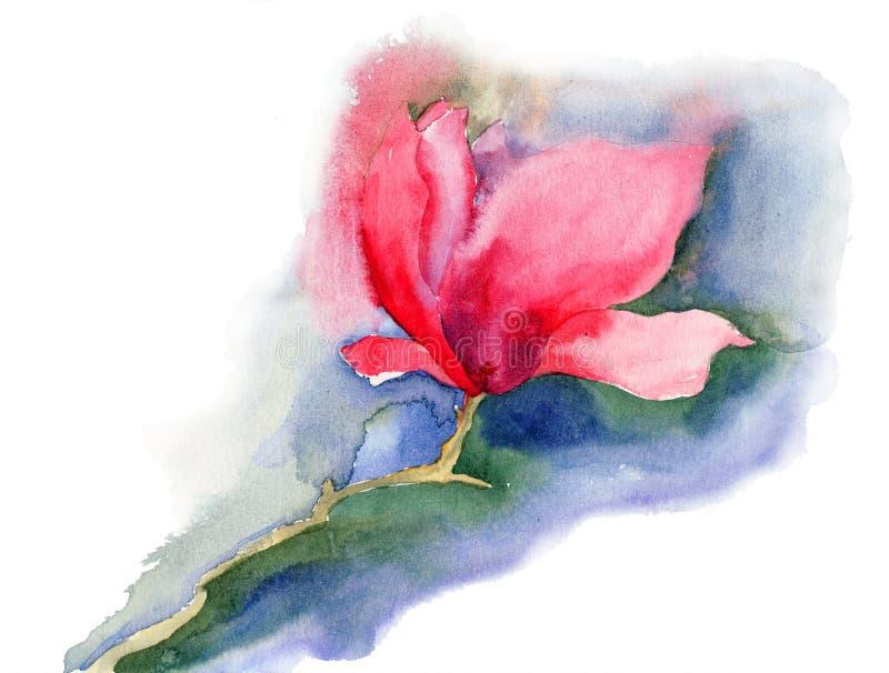 Flores Hermosas De La Magnolia Fotos de archivo libres de regalías