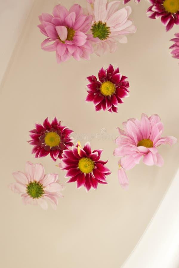 Flores hermosas de la margarita que flotan en agua fotos de archivo
