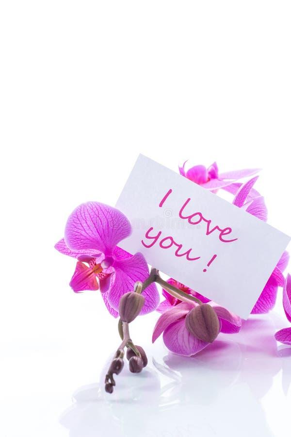 Flores hermosas de la orquídea del Phalaenopsis imagen de archivo libre de regalías
