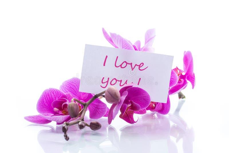 Flores hermosas de la orquídea del Phalaenopsis imagenes de archivo
