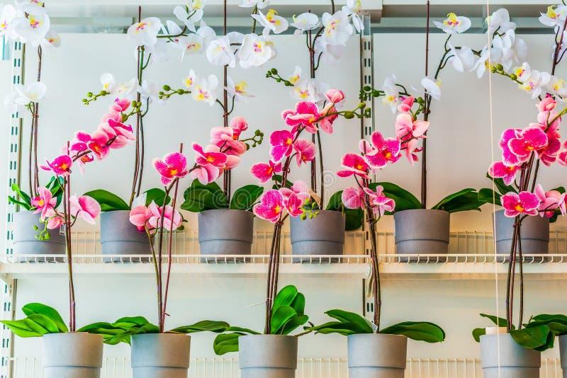 Flores hermosas de la orqu?dea en estantes de una tienda fotografía de archivo libre de regalías