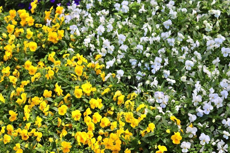 Flores hermosas de la primavera en diversos colores puestos en una cama de flor imagen de archivo libre de regalías