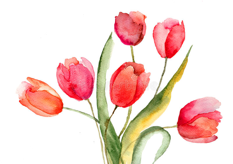Flores hermosas de los tulipanes