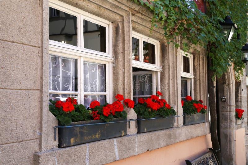 Flores hermosas del balcón foto de archivo libre de regalías