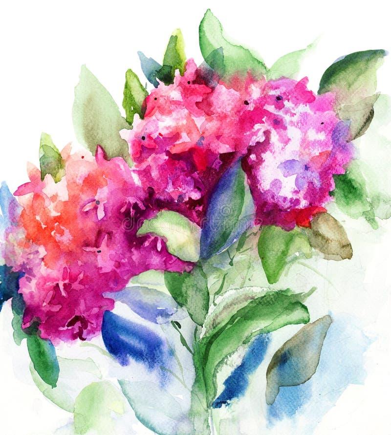 Flores hermosas del Hydrangea ilustración del vector