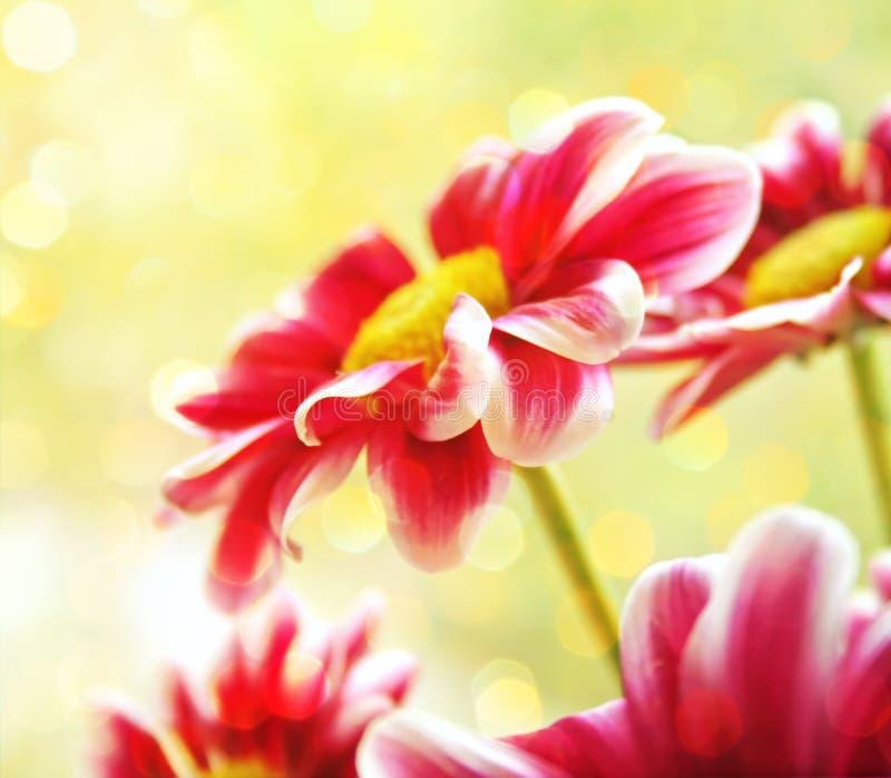 Flores hermosas del jardín fotos de archivo