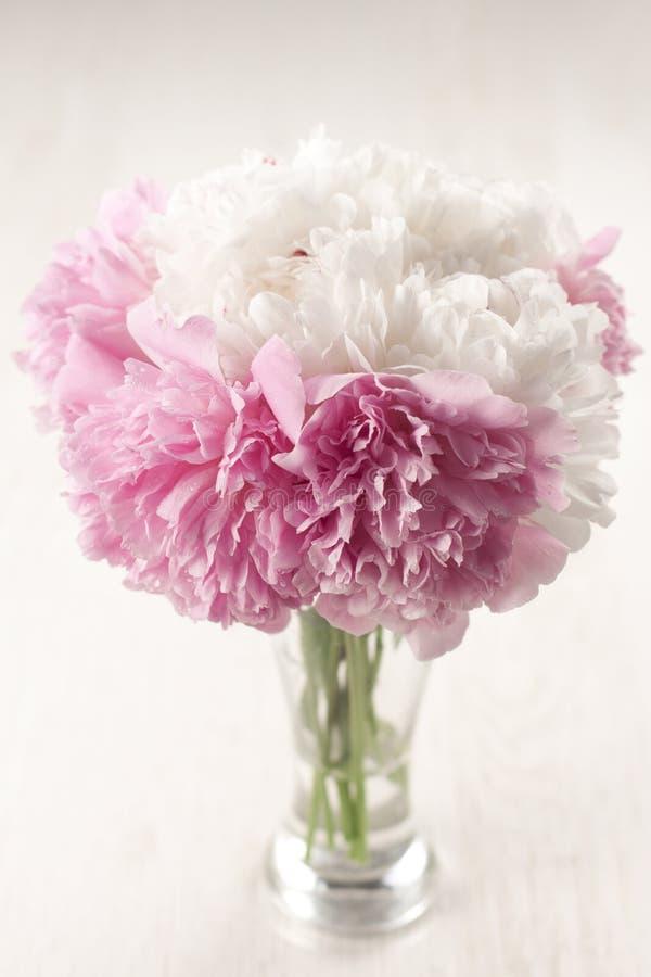 Flores hermosas del peony imágenes de archivo libres de regalías