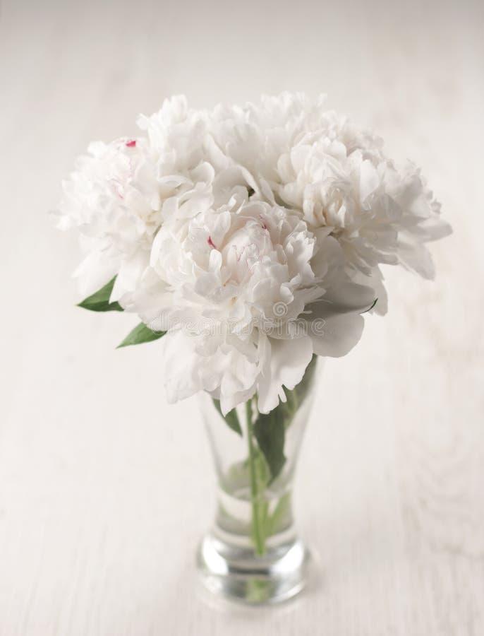 Flores hermosas del peony foto de archivo libre de regalías