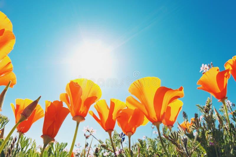 Flores hermosas del resorte fotografía de archivo libre de regalías