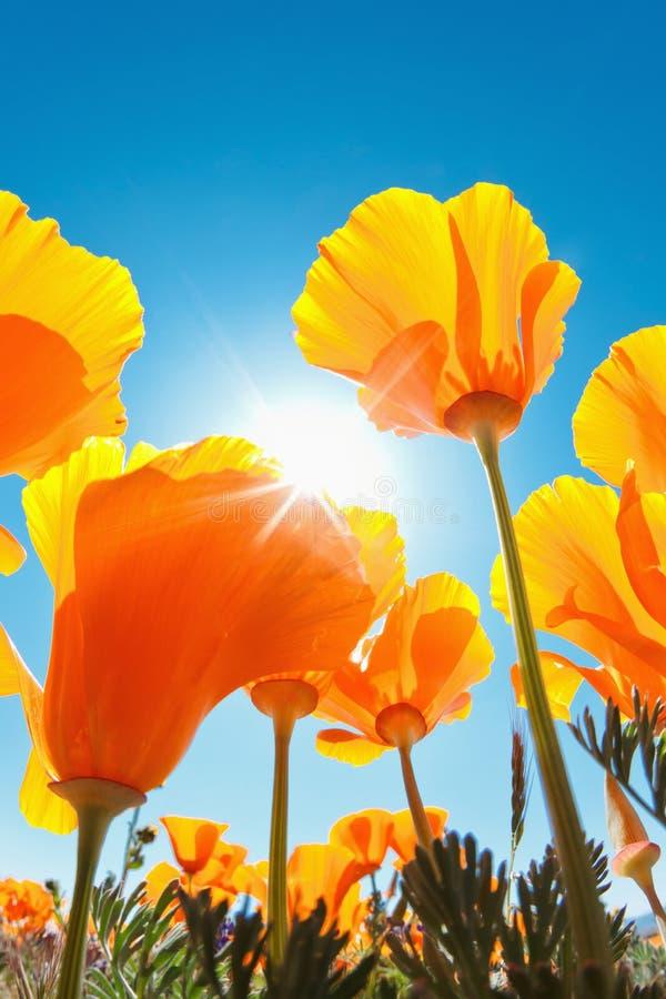 Flores hermosas del resorte fotos de archivo libres de regalías