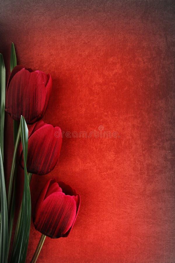 Flores hermosas del tulipán imagen de archivo