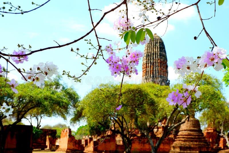 Flores hermosas dentro del templo imágenes de archivo libres de regalías