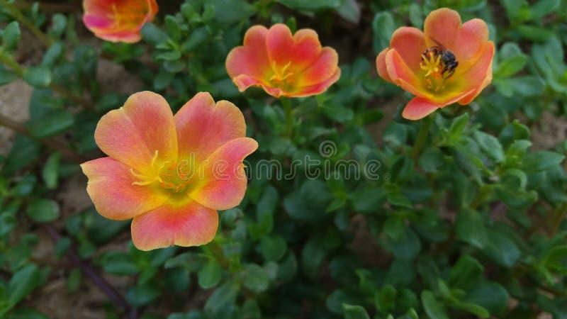 Flores hermosas dignas de usted una foto de archivo
