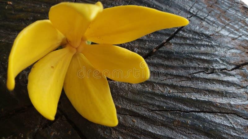 Flores hermosas dignas de usted una fotografía de archivo libre de regalías