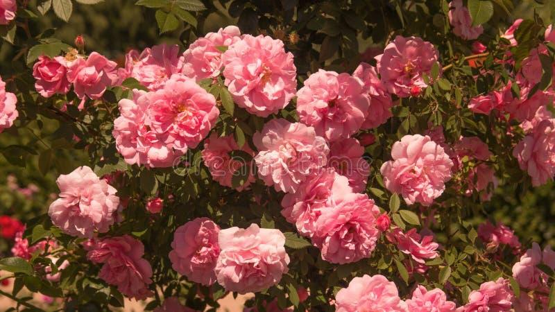 Flores hermosas en el campo imagenes de archivo