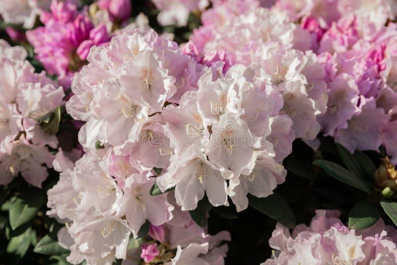 Flores hermosas en el primer del macizo de flores imagenes de archivo