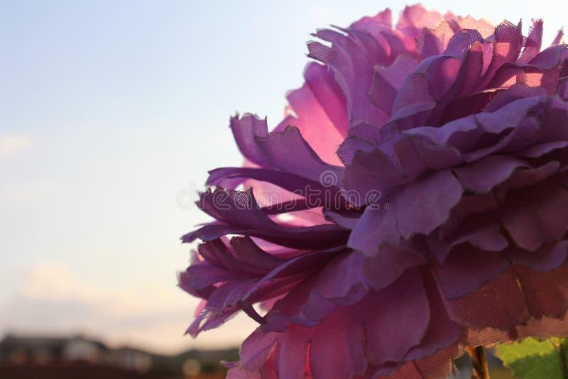 Flores hermosas en el tiempo de verano Birmingham 2018 imagen de archivo